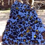 Najbardziej typowy przekrój pallasytu. Ilość frakcji metalicznej i oliwinów jest zbliżona.